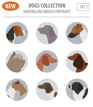 Illustration of a  beautiful Hunting dog breeds set icon isolated on white . Flat style. Vector illustration Illustration