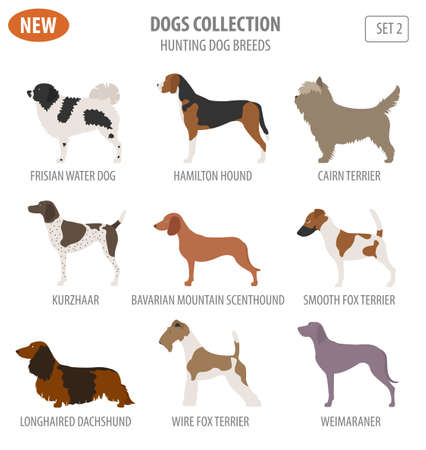 Cool concept of Hunting dog breeds set icon isolated on white . Flat style. Vector illustration