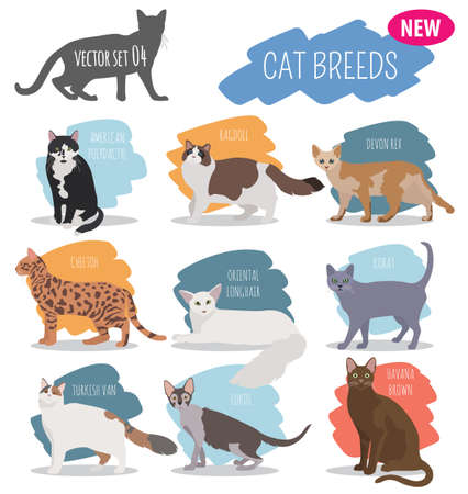 Cat breeds icon set flat style isolated on white. Create own infographic about pets. Vector illustration