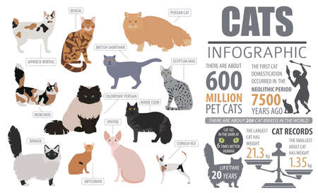 silueta de gato: Cat breeds infographic template, icon isolated on white. Vector illustration Vectores