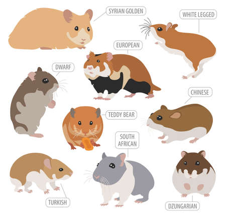 Hamster breeds icon set flat style isolated on white. Pet rodents collection. Create own infographic about pets. Vector illustration