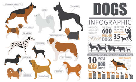 Dog info graphic template. Puppy breeds, pet isolated on white. Vector illustration