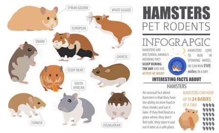 Criceto razze icona impostare stile piatto isolato su bianco. Raccolta di roditori animali. Crea infographic propri su animali domestici. Illustrazione vettoriale