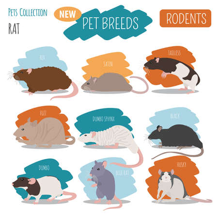 Rat breeds icon set flat style isolated on white. Pet rodents collection. Create own infographic about pets. Vector illustration Illustration