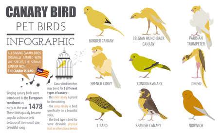 jorobado: Canarias criados icono conjunto estilo plano aislado en blanco. Colección de aves de compañía. Crea tu propia infografía sobre mascotas. Ilustración del vector