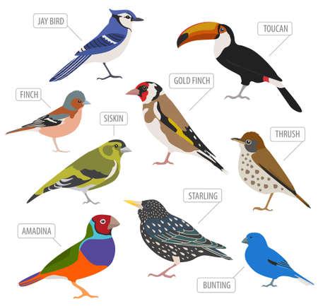 Huisdier vogels collectie, rassen pictogrammenset vlakke stijl geïsoleerd op wit. Maak een eigen infographic over huisdieren. Vector illustratie