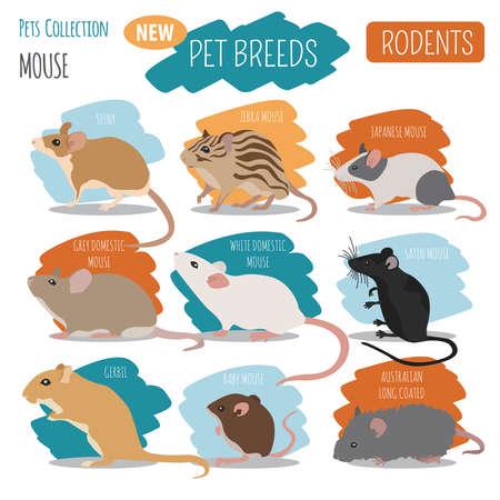 les races de souris icon set style isolé sur blanc. collection de maternelle des rongeurs sont conçus par des vétérinaires . illustration vectorielle