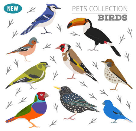 starling: Pet birds collection,  breeds icon set flat style isolated on white.  Create own infographic about pets. Vector illustration