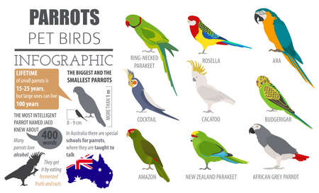 Parrot breeds icon set flat style isolated on white. Pet birds collection. Create own infographic about pets. Vector illustration Illustration