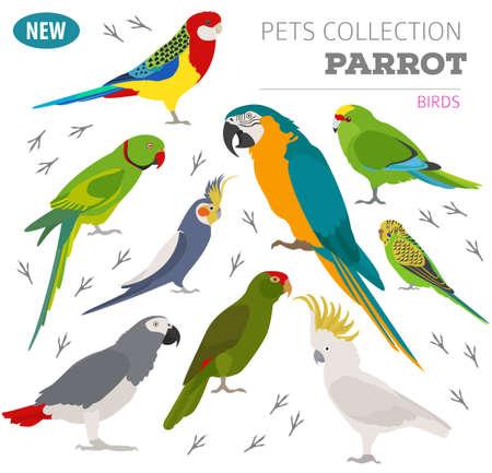 Perroquet reproduit icon set style plat isolé sur blanc. Collection d'oiseaux de compagnie. Créez votre propre infographie sur les animaux de compagnie. Illustration vectorielle Banque d'images - 80575877
