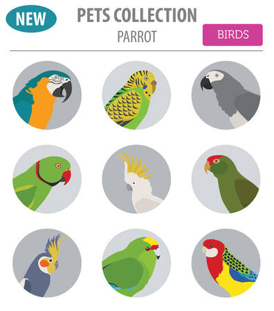 macaw: Parrot breeds icon set flat style isolated on white. Pet birds collection. Create own infographic about pets. Vector illustration Illustration