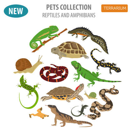 Pet reptiles and amphibians icon set flat style isolated on white. House keeping this animals collection. Create own infographic about pets. Vector illustration