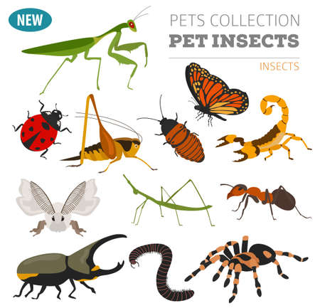 Pet insects breeds icon set flat style isolated on white. House keeping bugs, beetles, sticks, spiders and other collection. Create own infographic about pets. Vector illustration Фото со стока - 82524144