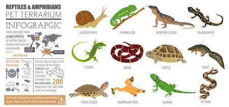 Pet reptiles and amphibians icon set flat style. Illustration