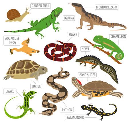 Reptiles de mascotas y anfibios icono conjunto estilo plano aislado en blanco. Casa que guarda esta colección de animales. Crea tu propia infografía sobre mascotas. Ilustración del vector Ilustración de vector