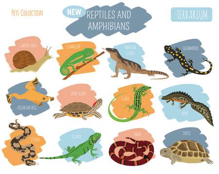 Huisdier reptielen en amfibieën pictogrammenset vlakke stijl geïsoleerd op wit. Huis met deze dierencollectie. Maak een eigen infographic over huisdieren. Vector illustratie
