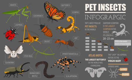 Pet insects breeds icon set. Çizim