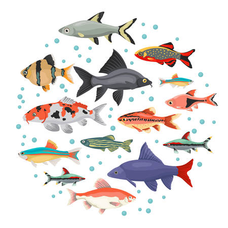 Freshwater aquarium fishes breeds icon set flat style isolated on white. Cyprinids. Create own infographic about pets. Vector illustration.