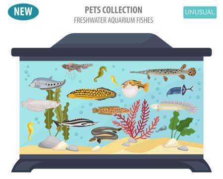 Poisson d'aquarium d'eau douce inhabituelle reproduit icon set style plat isolé sur blanc. Créez votre propre infographie sur animal de compagnie. Illustration vectorielle Banque d'images - 84894258