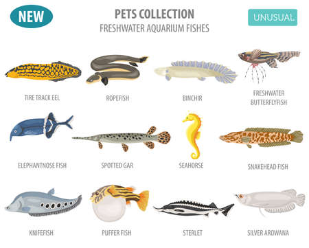 Ungewöhnliche Süßwasseraquarium-Fisch-Rassen-Icon-Set flachen Stil isoliert auf weiß. Erstellen Sie eigene Infografik über Haustier. Vektor-Illustration. Standard-Bild - 84894261