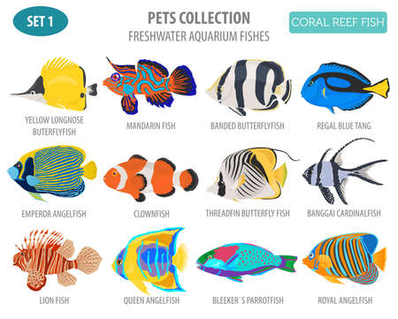 Freshwater aquarium fish breeds icon set flat style isolated on white. Coral reef. Create own infographic about pet. Vector illustration Stock fotó - 84894269