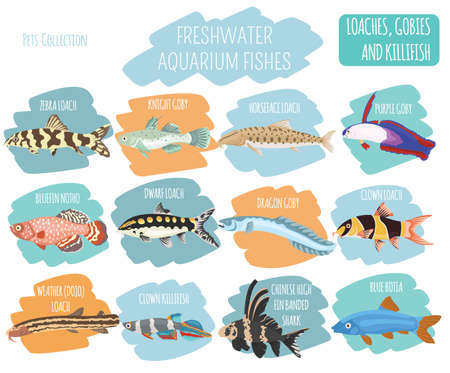 Freshwater aquarium fishes breeds icon set flat style isolated on white. Loaches, gobies, killifishes. Create own infographic about pets. Vector illustration.