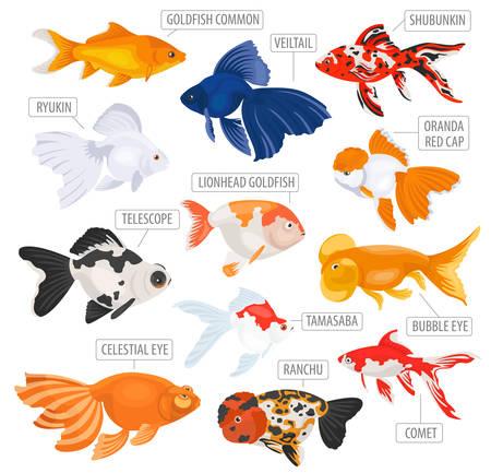 淡水のアクアリウムの魚の品種アイコンは、白で隔離フラット スタイルを設定します。金魚。ペットに関する独自のインフォ グラフィックを作成し  イラスト・ベクター素材