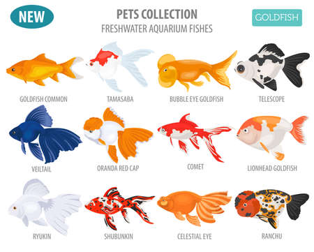 Freshwater aquarium fishes breeds icon set flat style isolated on white. Goldfish. Create own infographic about pets. Vector illustration. Vectores
