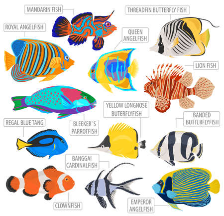 Freshwater aquarium fish breeds icon set flat style isolated on white. Coral reef. Create own infographic about pet. Vector illustration