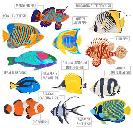 Les poissons d'aquarium d'eau douce reproduisent un style plat isolé sur blanc. Récif de corail. Créez votre propre infographie sur les animaux de compagnie. Illustration vectorielle
