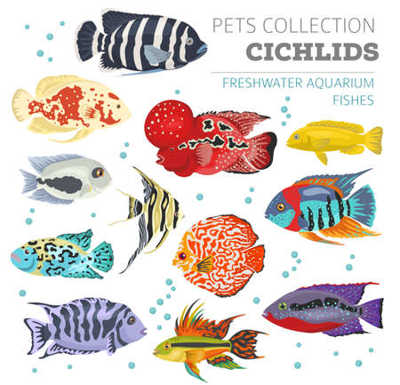 lionhead: Freshwater aquarium fishes breeds icon set flat style isolated on white. Cichlids. Create own infographic about pets. Vector illustration.