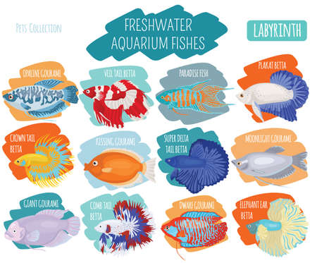 Freshwater aquarium fishes breeds icon set flat style isolated on white. Labyrinth fishes: betta, gourami. Create own infographic about pets. Vector illustration. Illustration