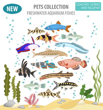 Freshwater aquarium fishes breeds icon set flat style isolated on white. Loaches, gobies, killifishes. Create own infographic about pets. Vector illustration. 向量圖像