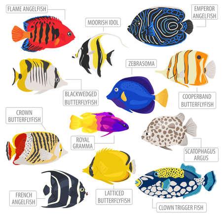 Peces de acuario de agua dulce criados icono conjunto estilo plano aislado en blanco. Arrecife de coral. Crea tu propio infográfico sobre pet. Ilustración del vector.