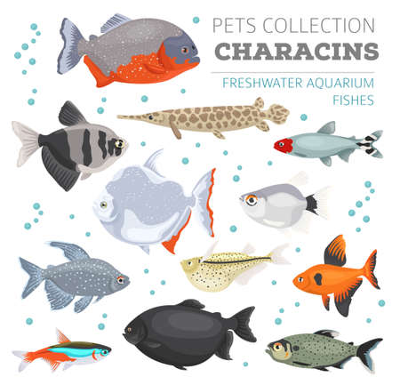 tetra: Freshwater aquarium fishes breeds icon set flat style isolated on white. Characins. Create own infographic about pets. Vector illustration.