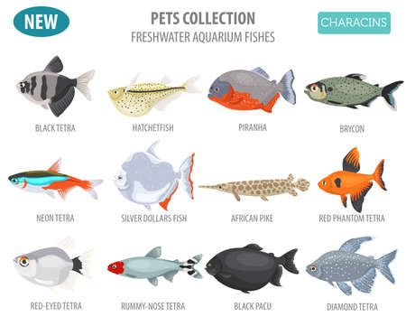 Freshwater aquarium fishes breeds icon set flat style isolated on white. Characins. Create own infographic about pets. Vector illustration.