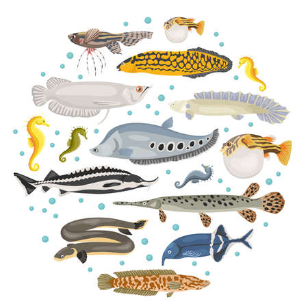 Unusual freshwater aquarium fish breeds icon set flat style isolated on white. Create own infographic about pet. Vector illustration. Illustration