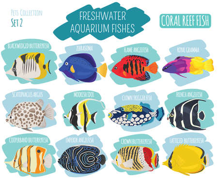 moorish idol: Freshwater aquarium fish breeds icon set flat style isolated on white. Coral reef. Create own infographic about pet. Vector illustration.