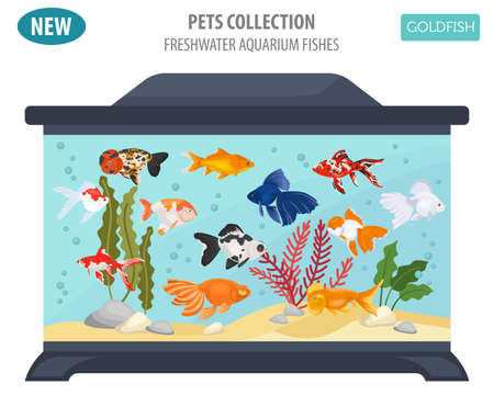 Freshwater aquarium fishes breeds icon set flat style isolated on white. Goldfish. Create own infographic about pets. Vector illustration. Illustration