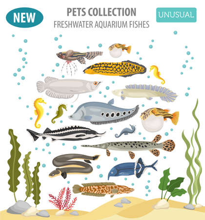 Unusual freshwater aquarium fish breeds icon set flat style isolated on white background. Create own infographic about pet. Vector illustration.