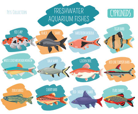 Freshwater aquarium fishes breeds icon set flat style isolated on white background. Cyprinids. Create own infographic about pets. Vector illustration.