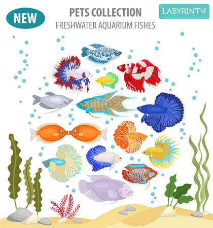 Freshwater aquarium fishes breeds icon set flat style isolated on white backgorund. Labyrinth fishes: betta, gourami. Create own infographic about pets. Vector illustration.