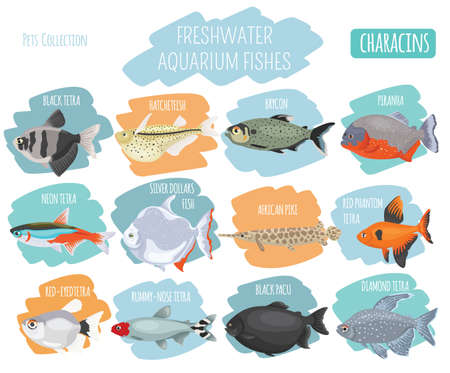 Freshwater aquarium fishes breeds icon set flat style isolated on white background. Characins. Create own infographic about pets. Vector illustration.