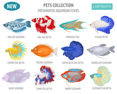 Freshwater aquarium fishes breeds icon set flat style isolated on white background. Labyrinth fishes: betta, gourami. Create own infographic about pets. Vector illustration