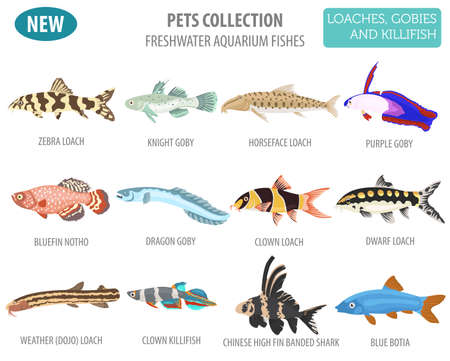 Freshwater aquarium fishes breeds icon set flat style isolated on white background. Loaches, gobies, killifishes. Create own infographic about pets. Vector illustration.