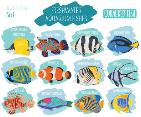 moorish idol: Freshwater aquarium fish breeds icon set flat style isolated on white background. Coral reef. Create own infographic about pet. Vector illustration.