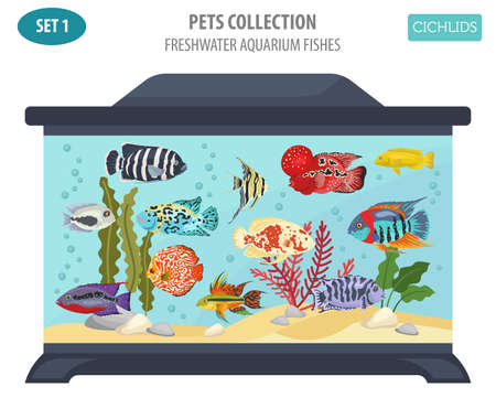 lionhead: Freshwater aquarium fishes breeds icon set flat style isolated on white background. Cichlids. Create own infographic about pets. Vector illustration.