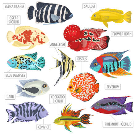 Freshwater aquarium fishes breeds icon set flat style isolated on white. Cichlids. Create own infographic about pets. Vector illustration.