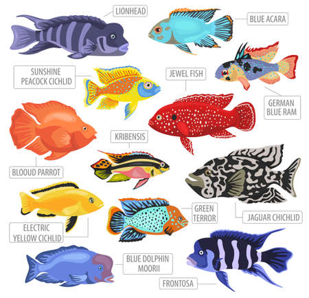 Freshwater aquarium fishes breeds icon set flat style isolated on white background. Cichlids. Create own infographic about pets. Vector illustration.