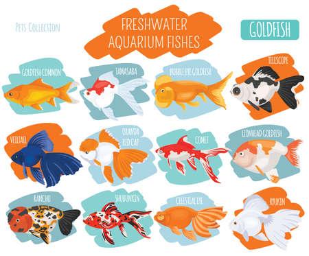 淡水のアクアリウムの魚の品種アイコンは、白い背景で隔離のフラット スタイルを設定します。金魚。ペットに関する独自のインフォ グラフィック  イラスト・ベクター素材